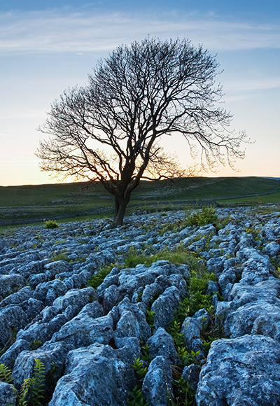 Lone tree at dusk above Malham