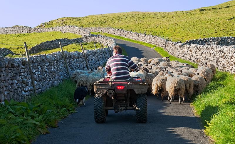 Modern Shepherd