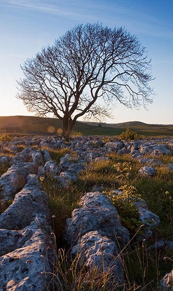 Sun goes down on lone Tree above Malham