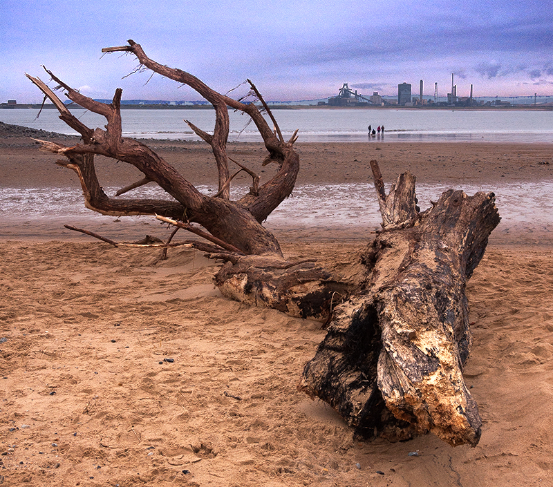 Driftwood tree_North Gare