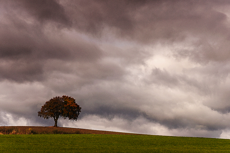 lone-beach-tree_how-hill-north-yorkshire