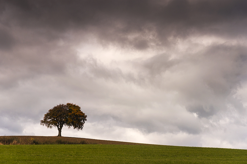 LRPS 4 - Lone Autumn Tree, How Hill, Yorkshire